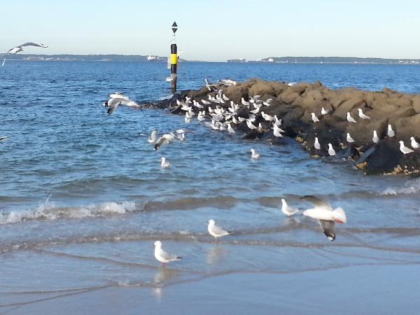 http://www.ratebe.com.au/images/photo/201305/277_1369912956.jpg